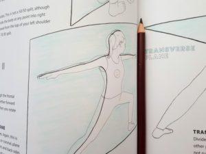ヨガ 解剖学 塗り絵