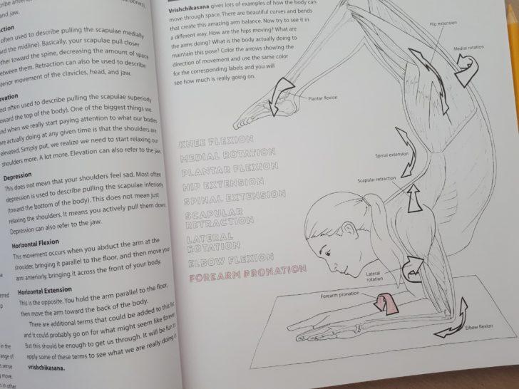 ヨガ解剖学 塗り絵